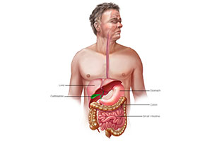 Osteopathic Approach to the GI Tract Including the Immune Digestion Connection