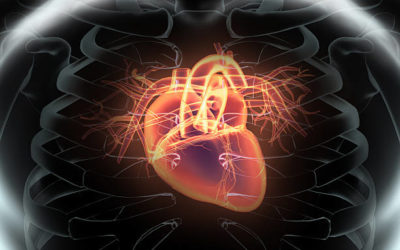 Discovering the Heart of Osteopathy
